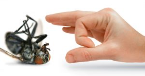 Phoenix-pest-and-termite-control