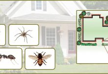 How to Prevent Insects with a Perimeter Treatment in York Pa